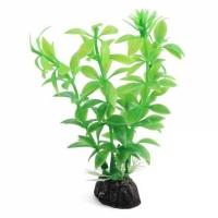 Гемиантус зелёный 10см, растение пластиковое